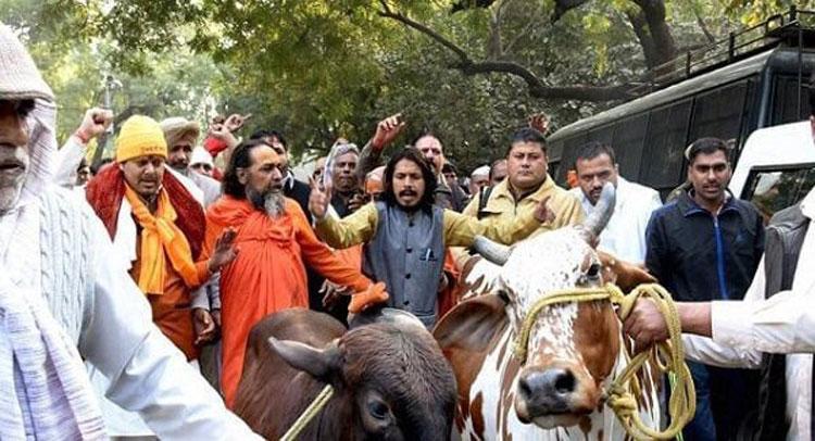 cow-startup-marathipizza02