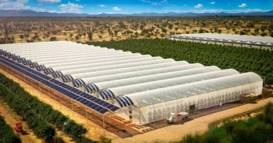 sundrop-farms-marathipizza00