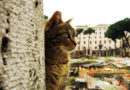 रोमन सम्राट सीजरने जिथे आपले शेवटचे शब्द उच्चारले, आज तिथे २५० मांजरी नांदतात..!