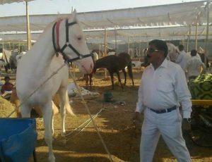 Sarangkheda horse festival.Inmarathi1