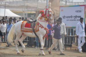 Sarangkheda horse festival.Inmarathi2