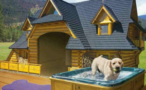Dogs magnificent Homes.Inmarathi