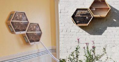 indoors-outdoors-bee-hives-inmarathi04