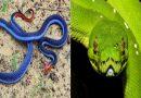 सृष्टीसौंदर्याचा अप्रतिम नमुना : जगातील १० सर्वात सुंदर सापांच्या प्रजाती !