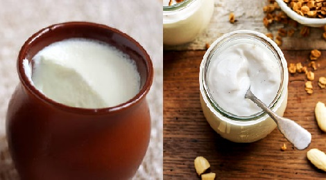 difference between yoghurt and curd-inmarathi01