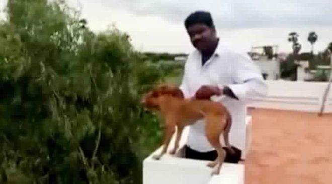 chennai dog torture case-inmarathi