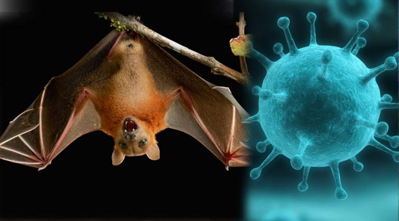 nipah-virus-inmarathi