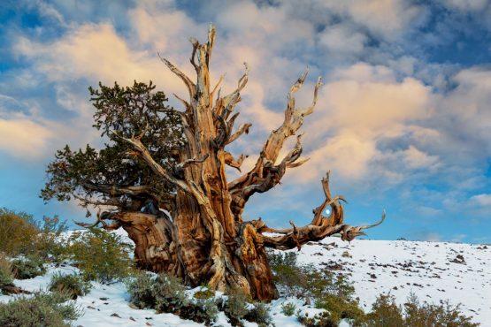 oldest-tree-inmarathi