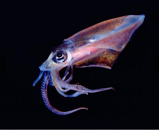 antarctica 05 Squid marathipizza