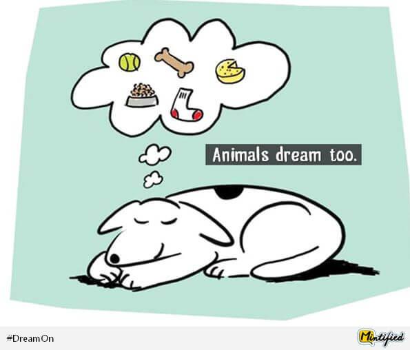 dreams-facts-marathipizza12