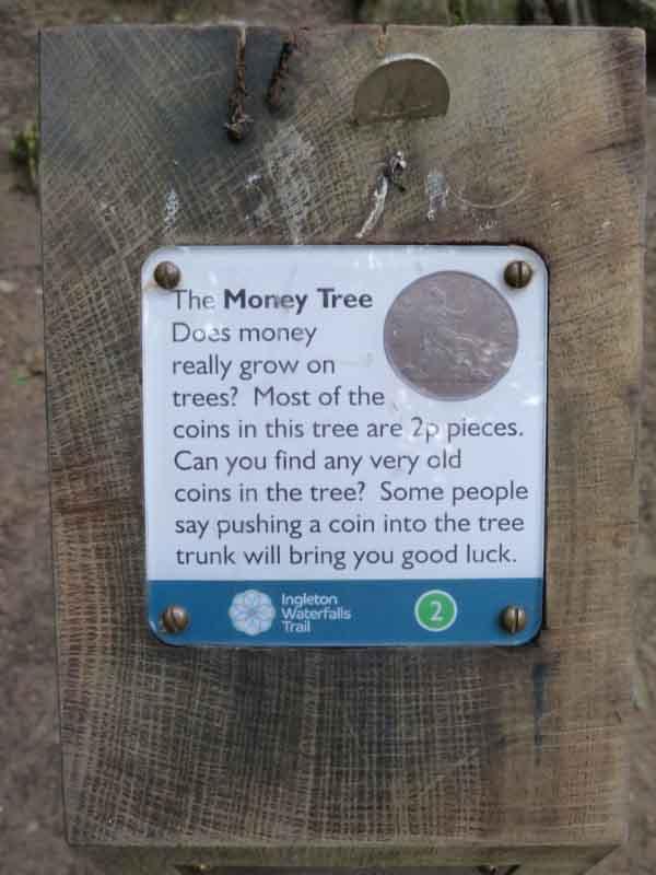 money-tree-marathipizza01