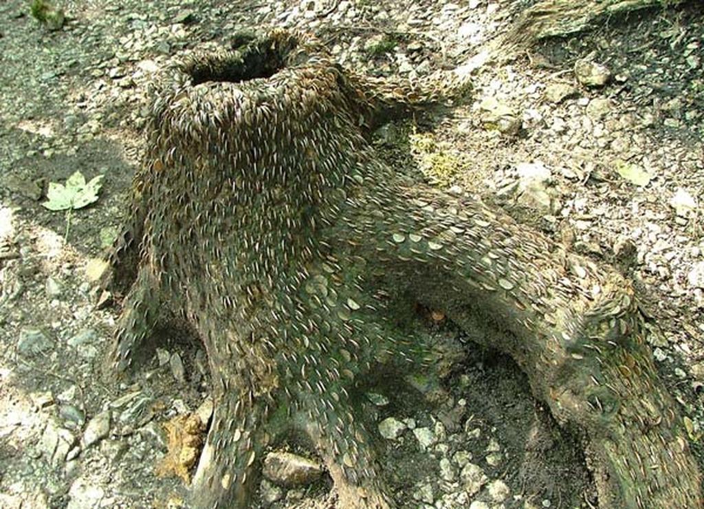 money-tree-marathipizza03