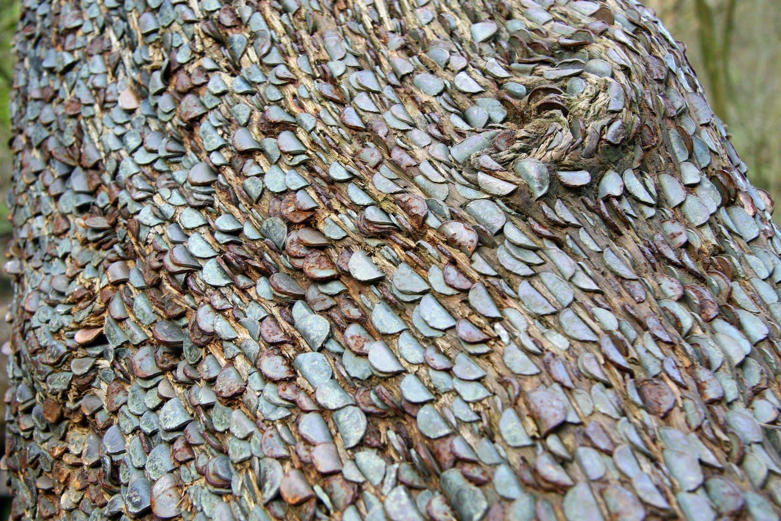 money-tree-marathipizza04