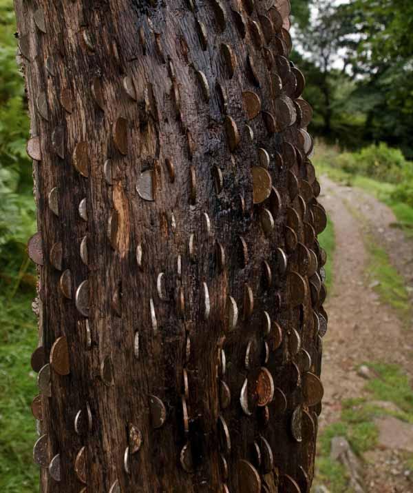 money-tree-marathipizza05