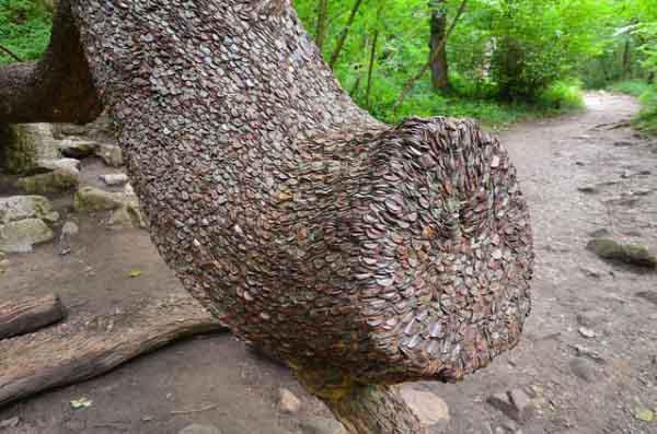 money-tree-marathipizza06