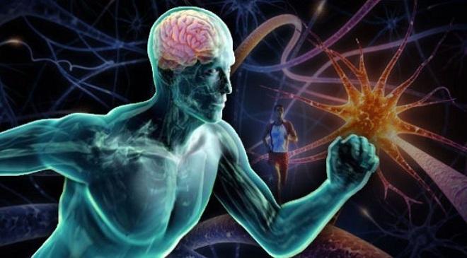 Sharp Brain Feature Inmarathi