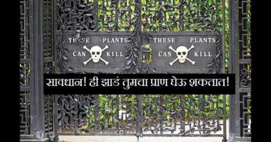 worlds-most-dangerous-garden-marathipizza00