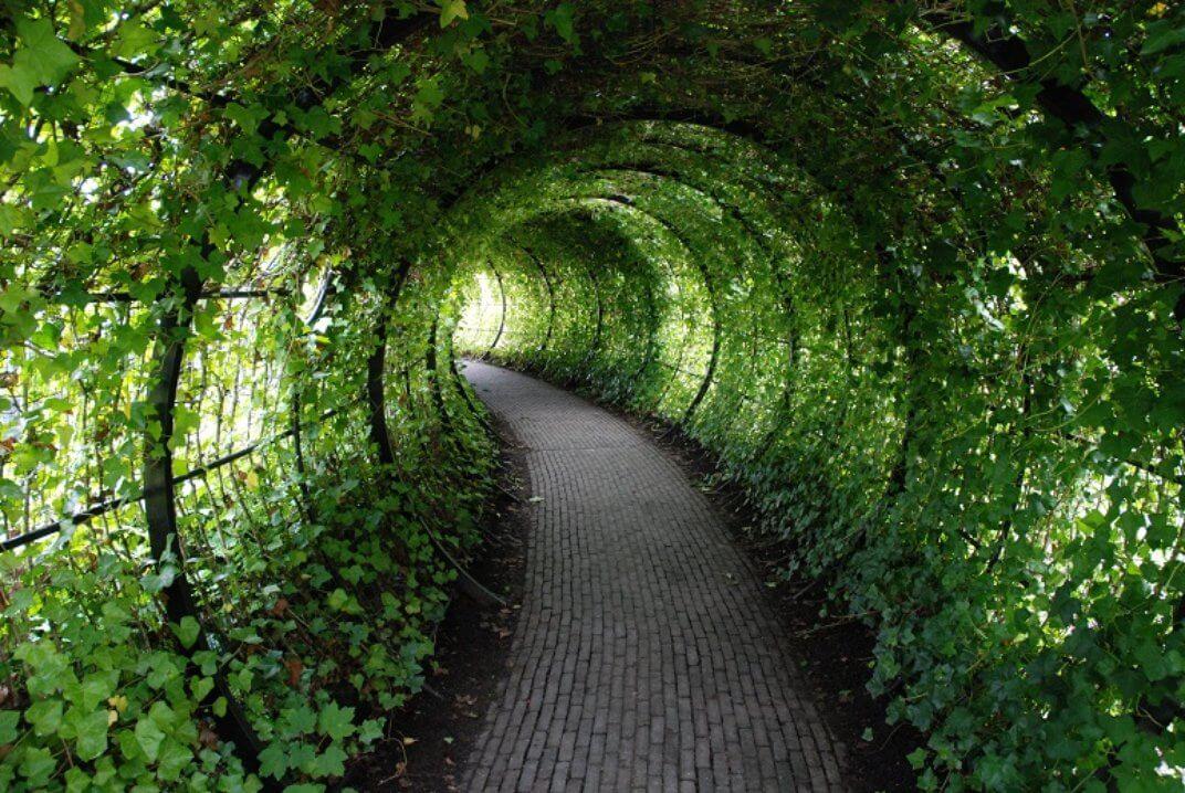 worlds-most-dangerous-garden-marathipizza02