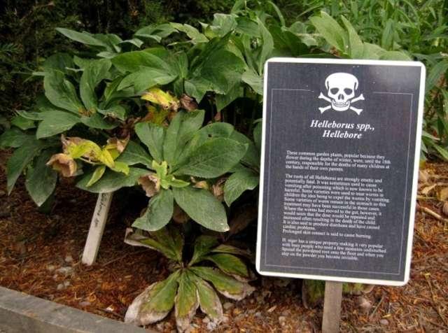 worlds-most-dangerous-garden-marathipizza04