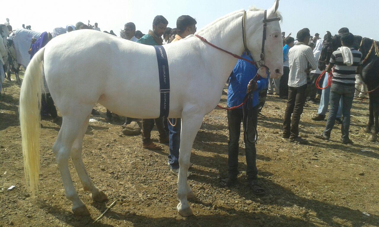 malegaon-fair-marathipizza05