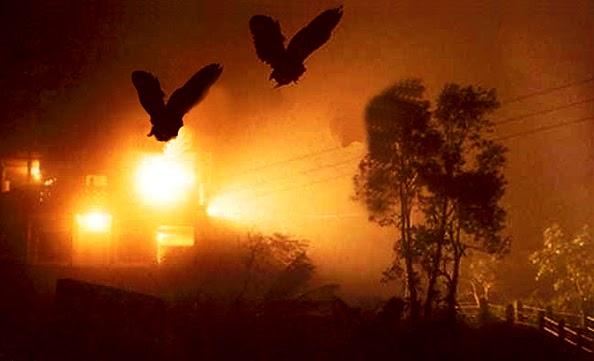 bird-sucide-jatinga-marathipizza02