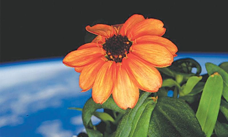 first-flower-in-space-marathipizza