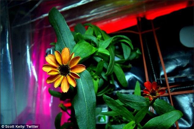 first-flower-in-space-marathipizza01