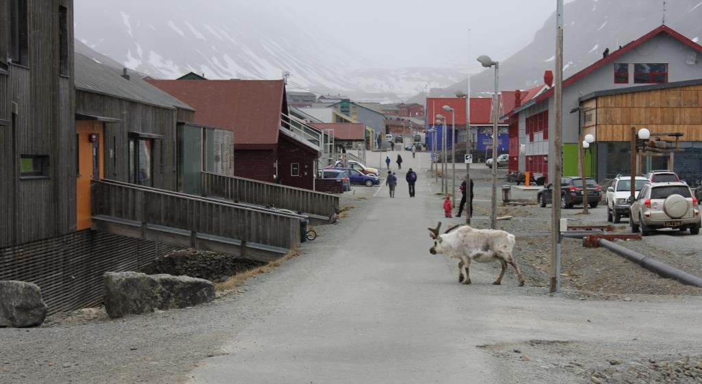 longyearbyen-marathipizza01