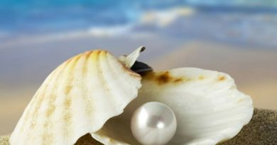 pearl-marathipizza01
