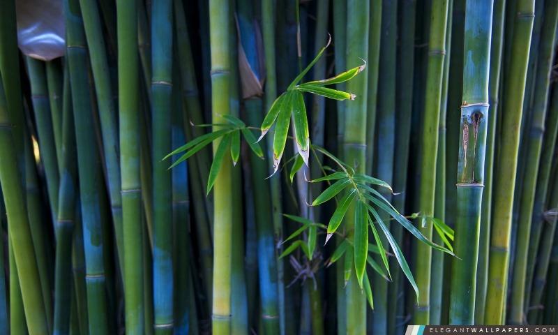 bamboo marathipizza