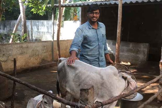 cow man inmarathi