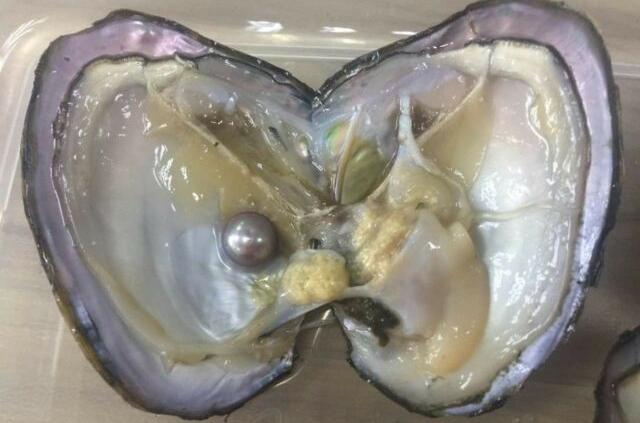 oyster pearl inmarathi