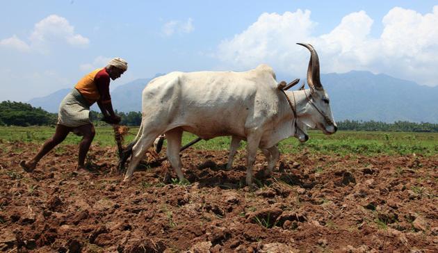 farmers-marathipizza02