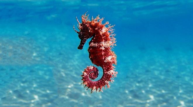seahors InMarathi