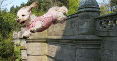 dog suicide inmarathi