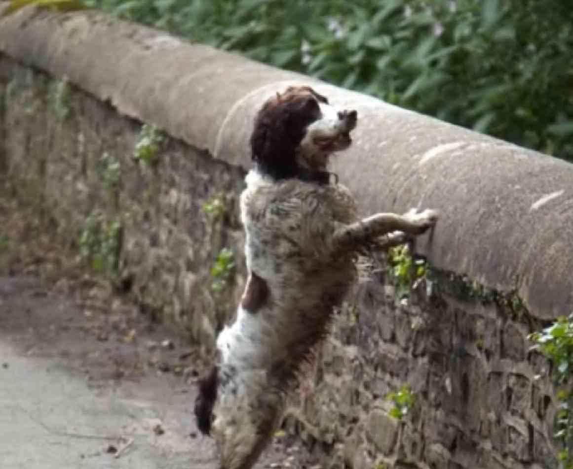 dog-suscide-marathipizza02