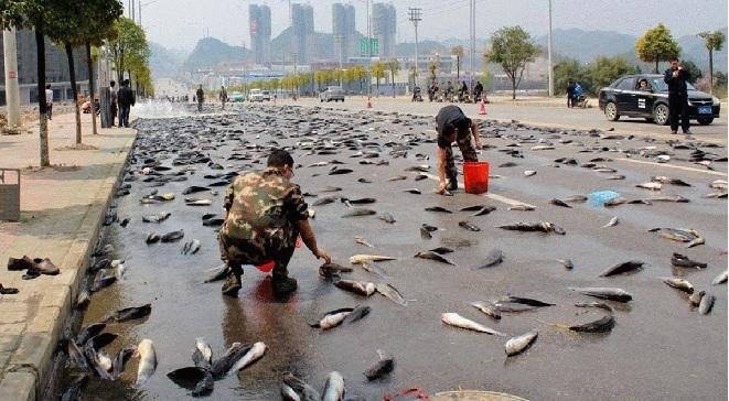 fish rain InMarathi
