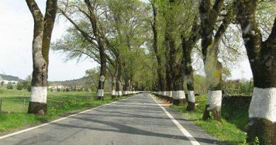 painted-trees-marathipizza00