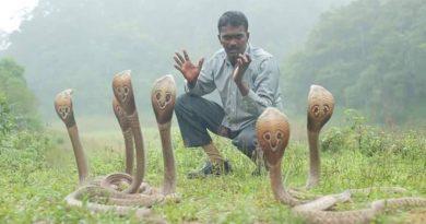 cobra-man-inmarathi