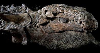 nodosaur-fossil-marathipizza00