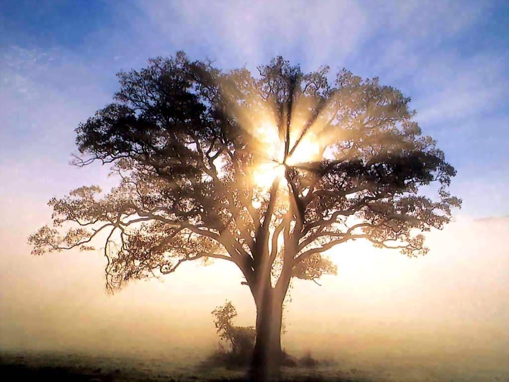 Brain-Tree-marathipizza03