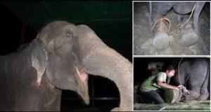 Raju elephant.mrathipizza1