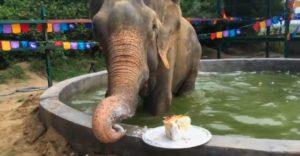 Raju elephant.mrathipizza3