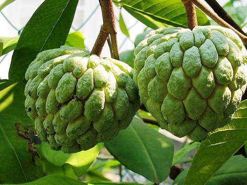custard-apple-marathipizza03