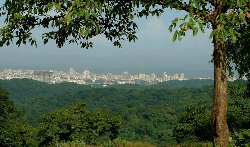 mumbai-marathipizza01