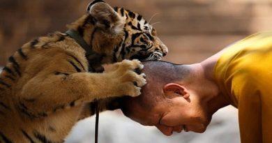 tiger temple01-marathipizza