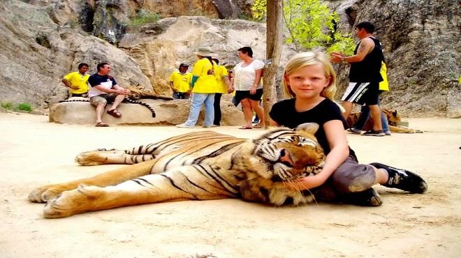 tiger temple03-marathipizza