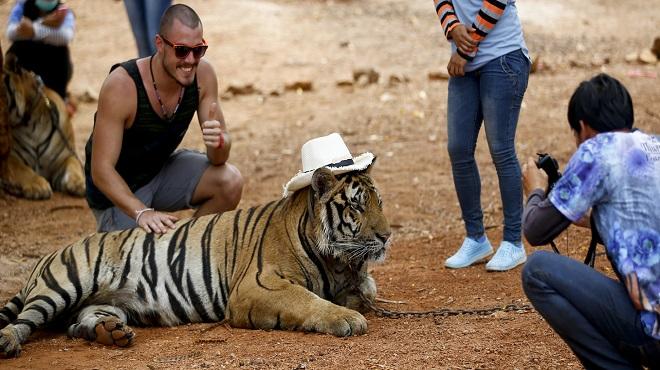 tiger-temple04-marathipizza