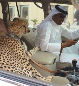 Dubai.Inmarathi7