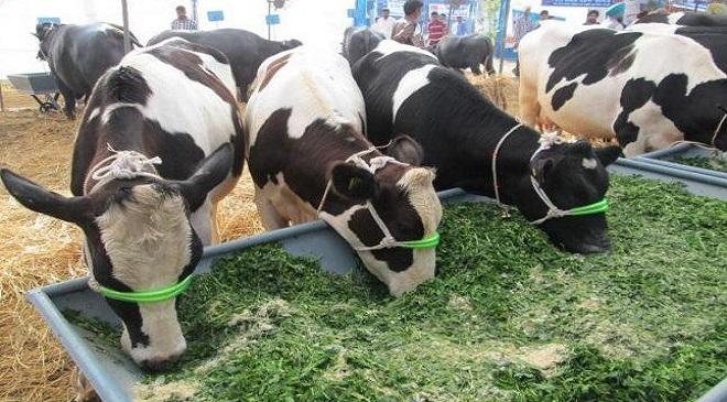 Tax on Animal husbandry-InMarathi